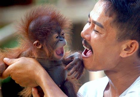 orangutan y humano